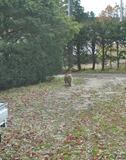 長野の野生のサルが庭を歩いてる写真